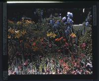 Smith - Iris & Tulips